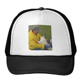 Tundra Swan - Banding Hats