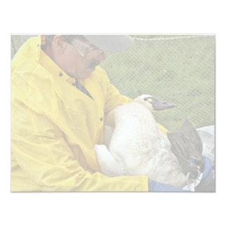 "Tundra Swan - Banding 4.25"" X 5.5"" Invitation Card"