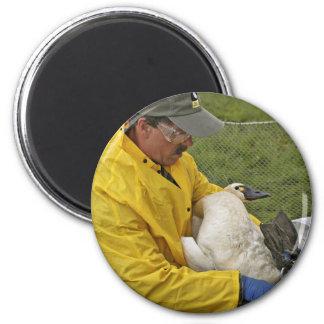 Tundra Swan - Banding Fridge Magnets
