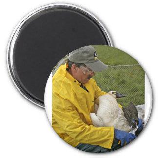 Tundra Swan - Banding Magnet