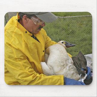 Tundra Swan - Banding Mousepads