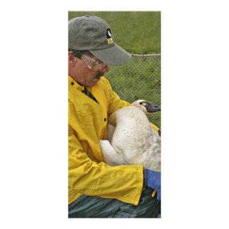 Tundra Swan - Banding Rack Cards