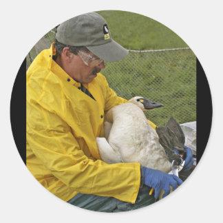 Tundra Swan - Banding Stickers