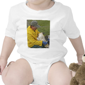 Tundra Swan - Banding T Shirt