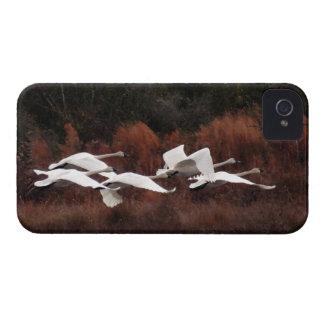 Tundra Swan Birds Wildlife Animals Case