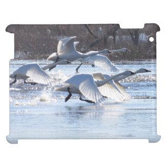 Tundra Swan Birds Wildlife Animals iPad Cases