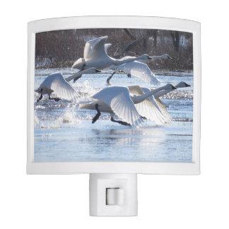 Tundra Swan Birds Wildlife Animals Night Light