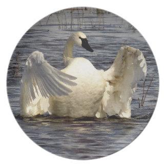 Tundra Swan Birds Wildlife Animals Plate