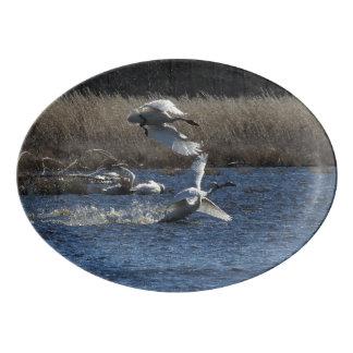 Tundra Swan Birds Wildlife Animals Serving Platter