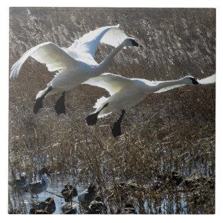 Tundra Swan Birds Wildlife Animals Tile