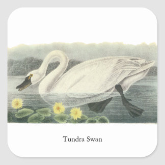 Tundra Swan, John Audubon Stickers