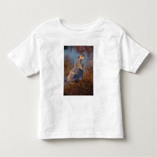 Tundra Swan or Whistling swan nesting, 1002 Toddler T-shirt