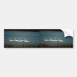 Tundra swans car bumper sticker