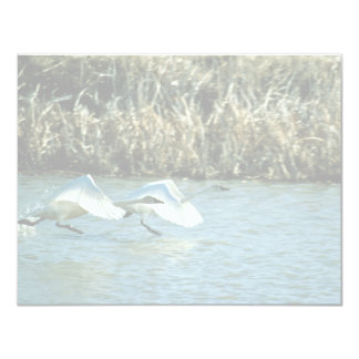 Tundra Swans Personalized Announcements