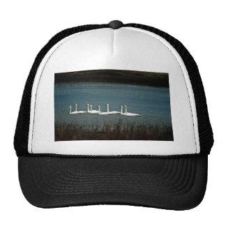 Tundra swans trucker hat