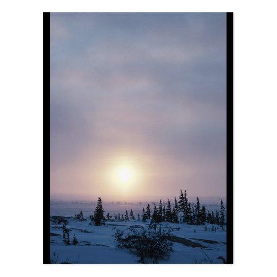 Tundra Wilderness Postcard
