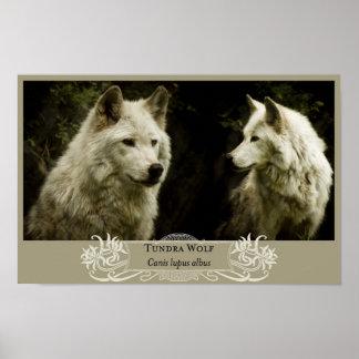 Tundra Wolf 11x17 Poster