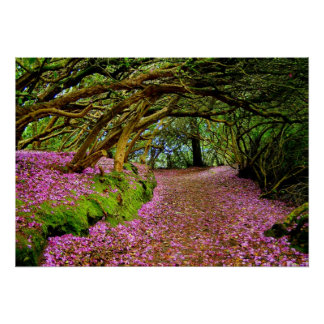 Túnel del rododendro de Kenmare -… - Modificado pa Impresiones