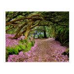 Túnel del rododendro de Kenmare Postal