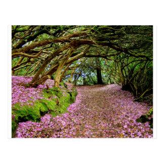 Túnel del rododendro de Kenmare Tarjetas Postales
