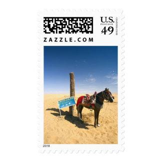 Túnez, área de Ksour, Ksar Ghilane, caballo en Sellos