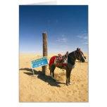 Túnez, área de Ksour, Ksar Ghilane, caballo en Tarjeton