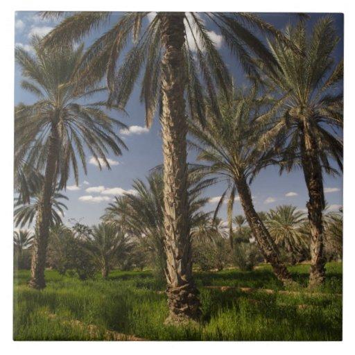 Túnez, área de Ksour, Ksar Ghilane, palma datilera Azulejos