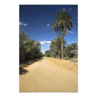 Túnez, área de Ksour, Ksar Ghilane, palma datilera Fotografía