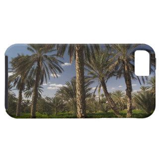 Túnez, área de Ksour, Ksar Ghilane, palma datilera iPhone 5 Case-Mate Funda