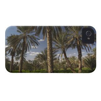 Túnez, área de Ksour, Ksar Ghilane, palma datilera Case-Mate iPhone 4 Funda