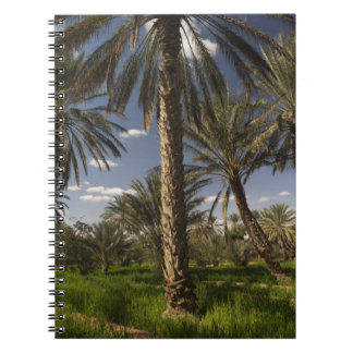 Túnez, área de Ksour, Ksar Ghilane, palma datilera Libretas