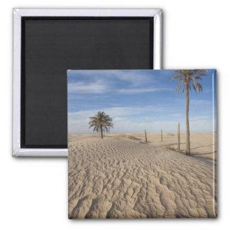 Túnez, desierto del Sáhara, Douz, gran duna, amane Imán Cuadrado