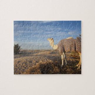 Túnez, desierto del Sáhara, Douz, gran duna, camel Puzzles Con Fotos