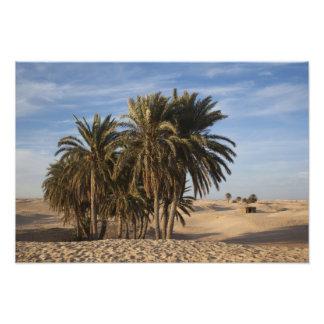Túnez, desierto del Sáhara, Douz, gran duna, palma Fotografía