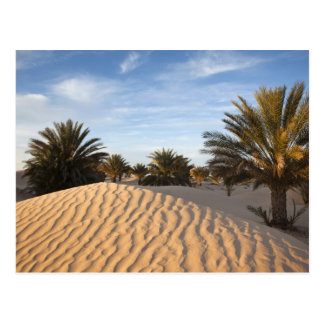 Túnez, desierto del Sáhara, Douz, gran duna, palma Postal