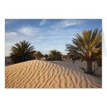 Túnez, desierto del Sáhara, Douz, gran duna, palma Tarjetón