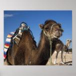 Túnez, desierto del Sáhara, Douz, zona Touristique Poster