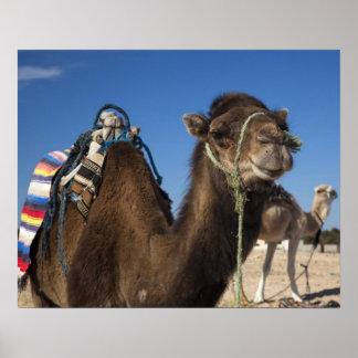 Túnez, desierto del Sáhara, Douz, zona Touristique Póster