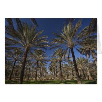 Túnez, desierto del Sáhara, Douz, zona Touristique Tarjeta De Felicitación