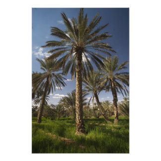 Tunisia, Ksour Area, Ksar Ghilane, date palm 2 Photo Print