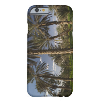 Tunisia, Ksour Area, Ksar Ghilane, date palm Barely There iPhone 6 Case