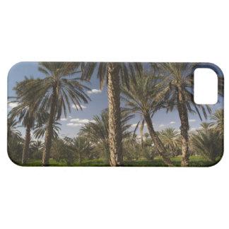 Tunisia, Ksour Area, Ksar Ghilane, date palm iPhone SE/5/5s Case