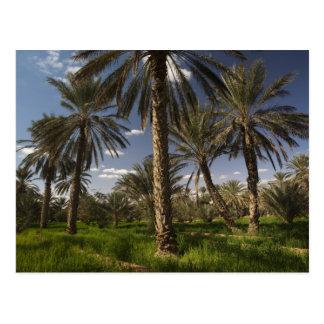 Tunisia, Ksour Area, Ksar Ghilane, date palm Postcard