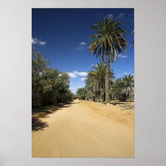 Tunisia, Ksour Area, Ksar Ghilane, date palm Poster