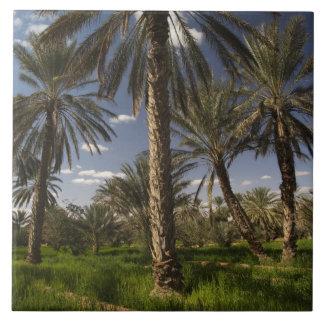Tunisia, Ksour Area, Ksar Ghilane, date palm Large Square Tile