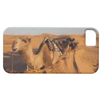 Tunisia, Ksour Area, Ksar Ghilane, Grand Erg 5 iPhone SE/5/5s Case
