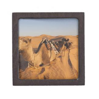 Tunisia, Ksour Area, Ksar Ghilane, Grand Erg 5 Premium Jewelry Boxes