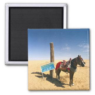 Tunisia, Ksour Area, Ksar Ghilane, horse in the 2 Inch Square Magnet