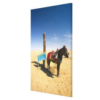 Tunisia, Ksour Area, Ksar Ghilane, horse in the Canvas Print