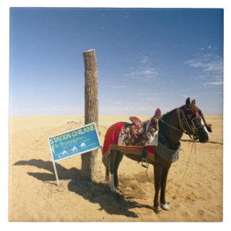 Tunisia, Ksour Area, Ksar Ghilane, horse in the Ceramic Tile